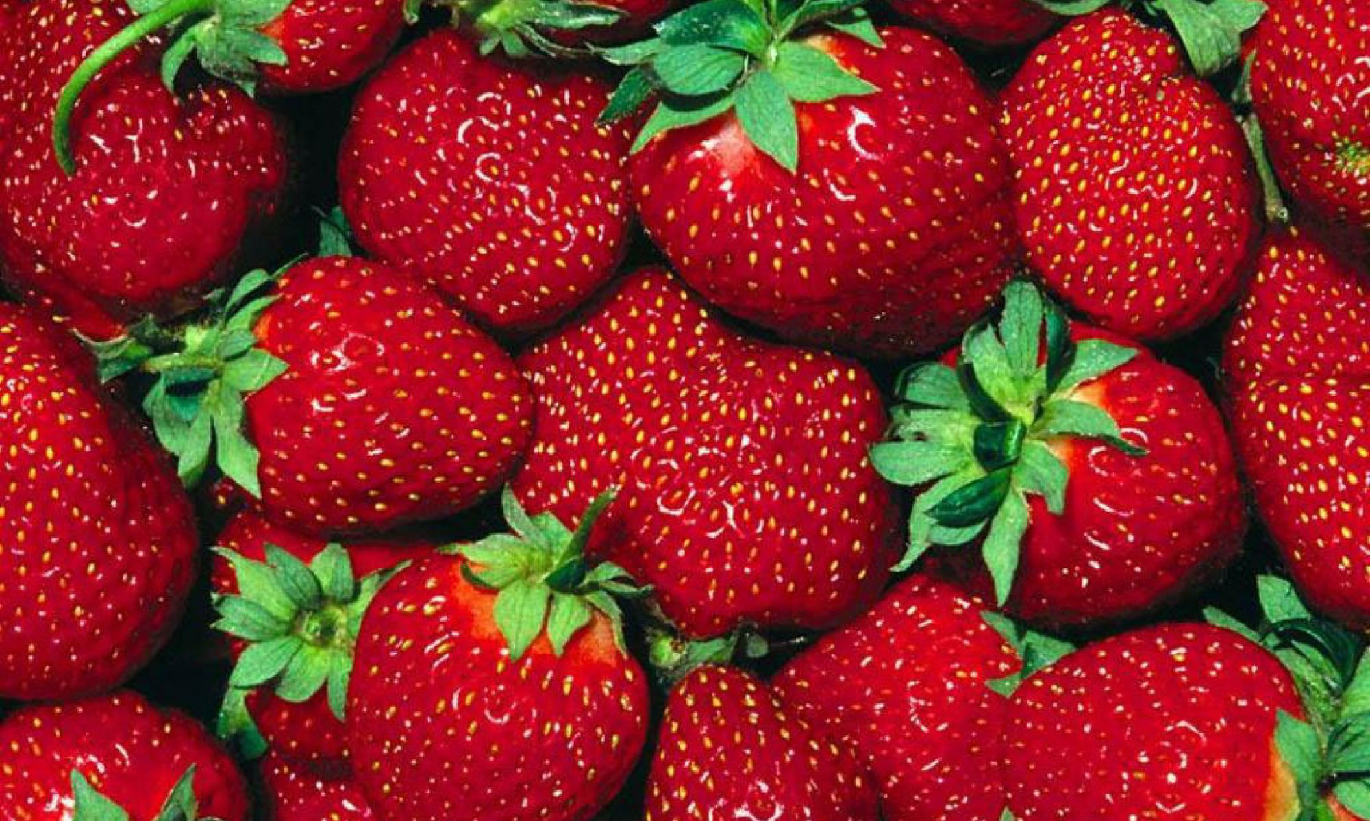 Paulridge Berry Farm - Napanee, Ontario - PYO Strawberry, Raspberry